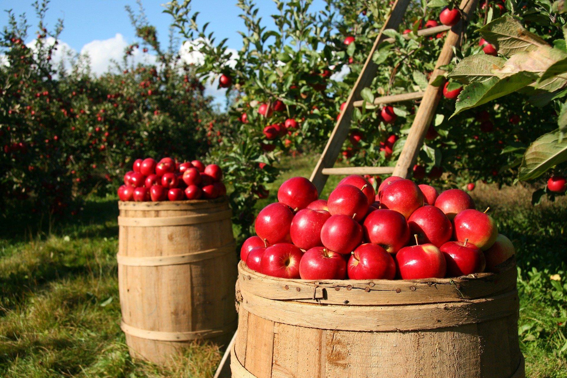 Gyümölcstermesztő termelői csoportok támogatási programja - 9.1a alintézkedés