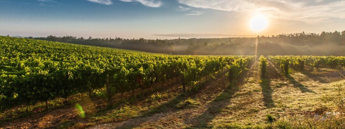 A szőlőtermesztés múltja és jelene Érköbölkúton