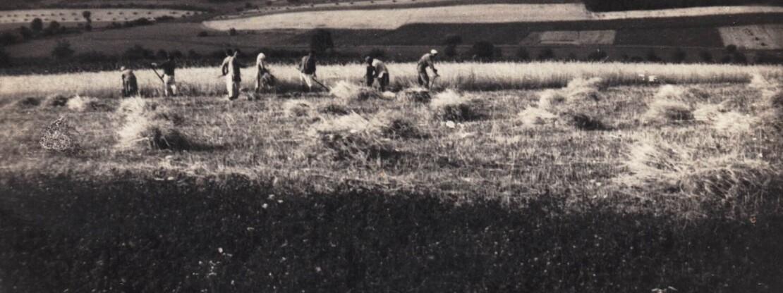 Mezőgazdaság az elmúlt száz évben.